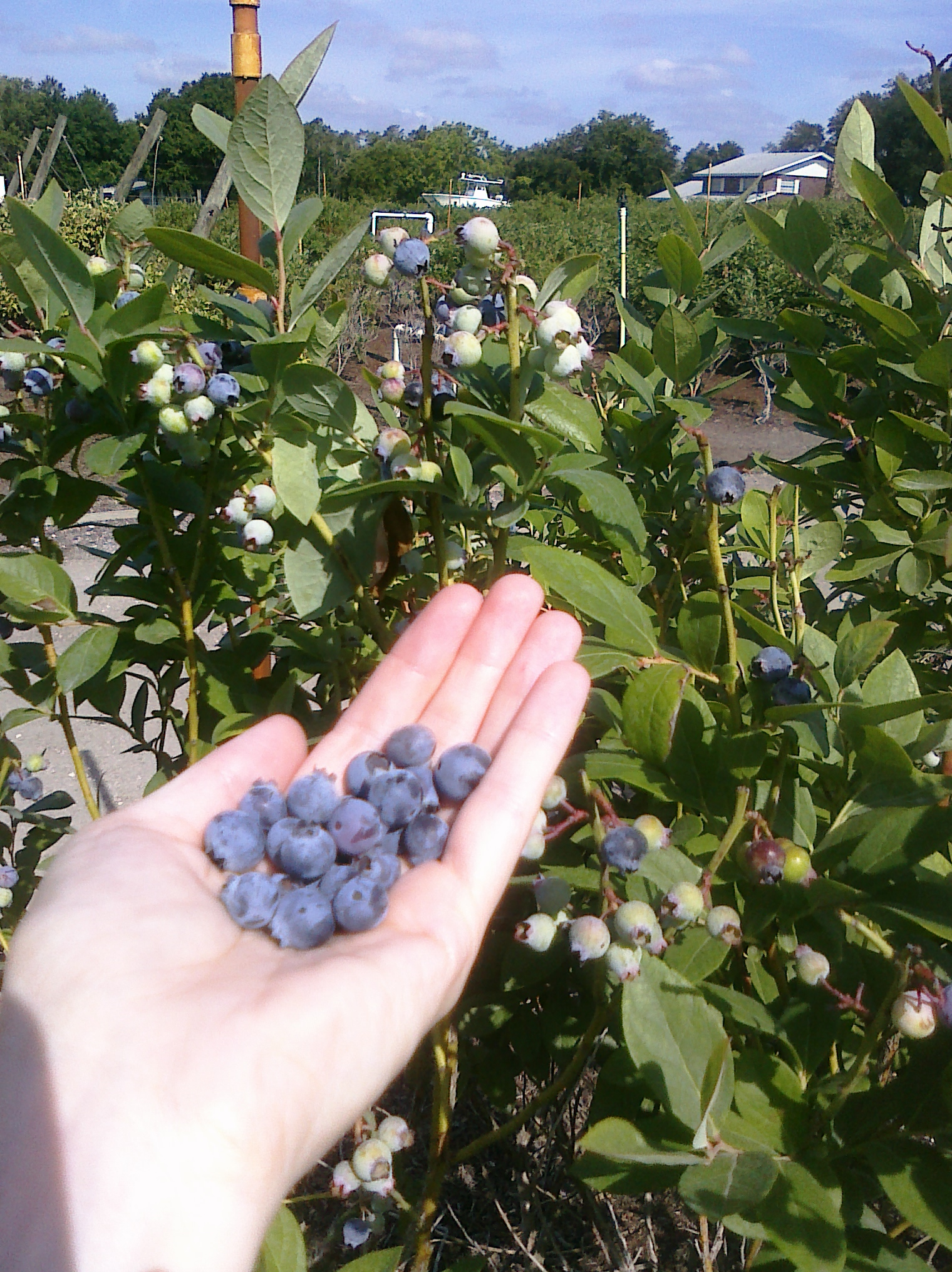 mmm... blueberries!