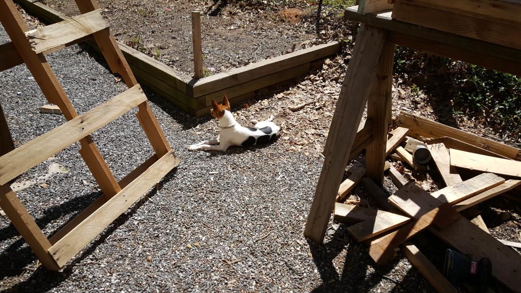 Chip enjoying the sun
